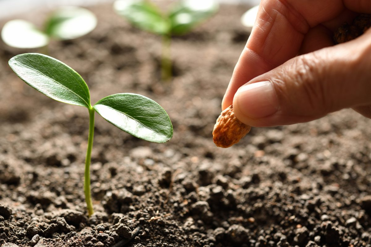 A hand planting a seed next to a seedling showing how if you start a blog it helps grow brand awareness